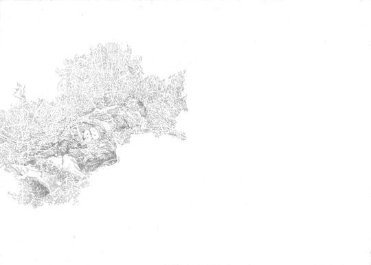 Schlaf   2016   Bleistift auf Papier   88 x 62 cm